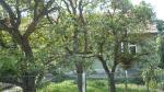 ořezané jabloně